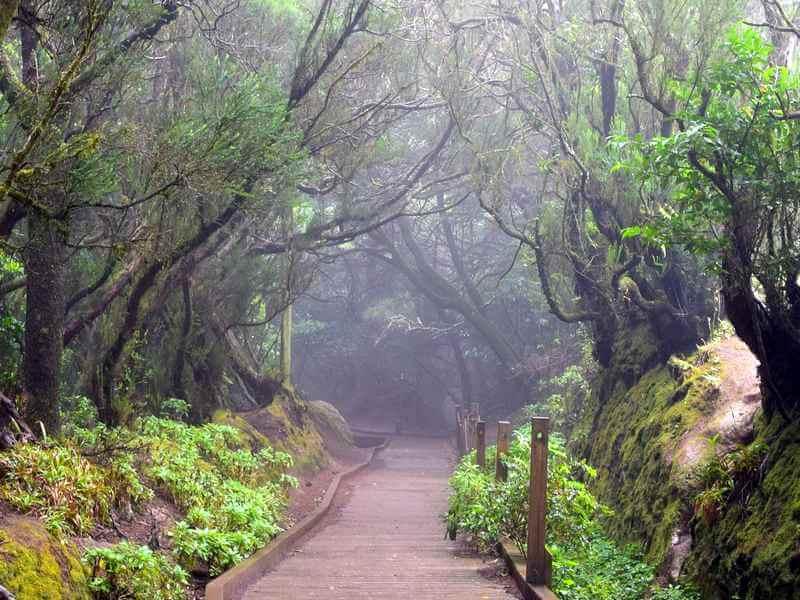 Лес Анага на Тенерифе