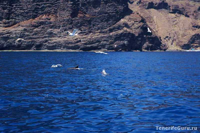 Дельфины на Тенерифе у Лос Гигантес