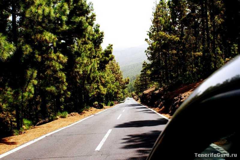 Дорога на Тенерифе в лесу