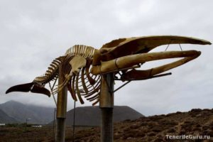 Чарко де ла Аранья: скелет кита скелет кита сейвала
